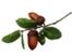 coastal tree service contact info/>                               </td>               </tr>               <tr>                 <td> <span class=