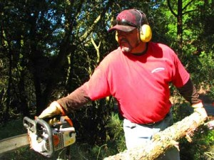 berkeley stump removal
