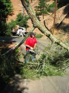 coastal tree service Dangerous tree removal