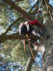 berkeley tree removal