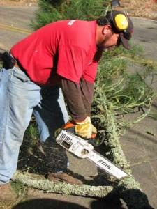 berkeley ca tree removal